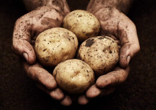 Shoppers urged to seek out British potatoes to ease farmers' lockdown surplus